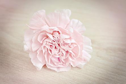 Flower 1364746 960 720