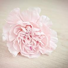Thumb flower 1364746 960 720